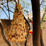 Make a Sugar Cone Bird Feeder Craft